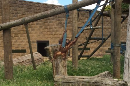 Year 7 Parents: Useful information regarding our trip to Twycross Zoo